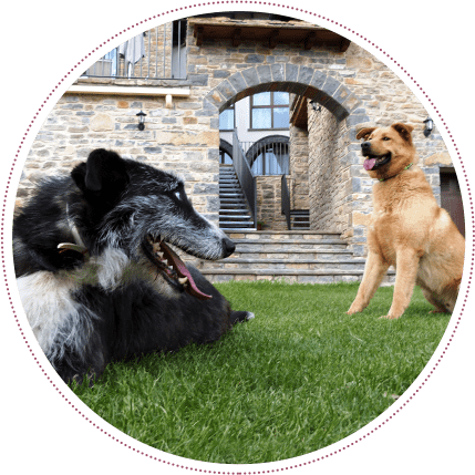apartamentos boltaña animales